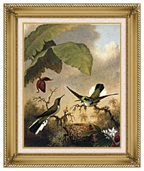 Martin Johnson Heade Black Eared Fairy canvas with gallery gold wood frame