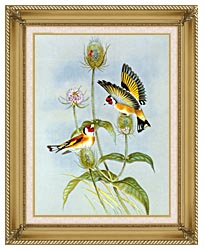 John Gould Goldfinch canvas with gallery gold wood frame