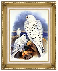 John Gould Gyrfalcon   Greenland Falcon canvas with gallery gold wood frame