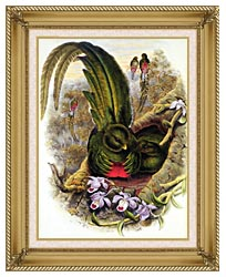 John Gould Quetzal canvas with gallery gold wood frame