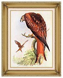John Gould Red Kite canvas with gallery gold wood frame