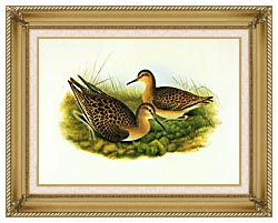 John Gould Ruff canvas with gallery gold wood frame