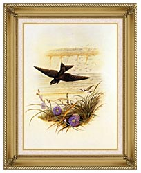 John Gould Sand Martin canvas with gallery gold wood frame
