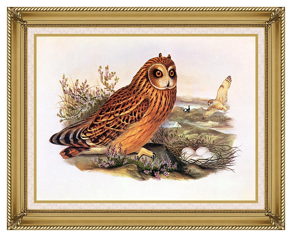 John Gould Short-Eared Owl with Gallery Gold Frame w/Liner