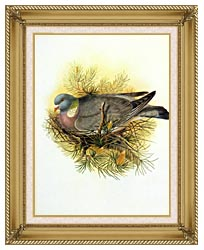 John Gould Wood Pigeon canvas with gallery gold wood frame