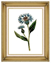 William Curtis Greater Blue Bottle canvas with gallery gold wood frame