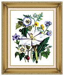 Jane Loudon Flower Art Print canvas with gallery gold wood frame
