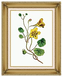 William Curtis Indian Cress canvas with gallery gold wood frame