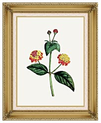 William Curtis Prickly Lantana canvas with gallery gold wood frame