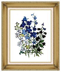 Jane Loudon Larkspurs canvas with gallery gold wood frame