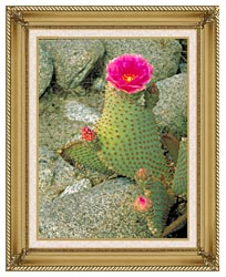 U S Fish And Wildlife Service Beavertail Cactus canvas with gallery gold wood frame