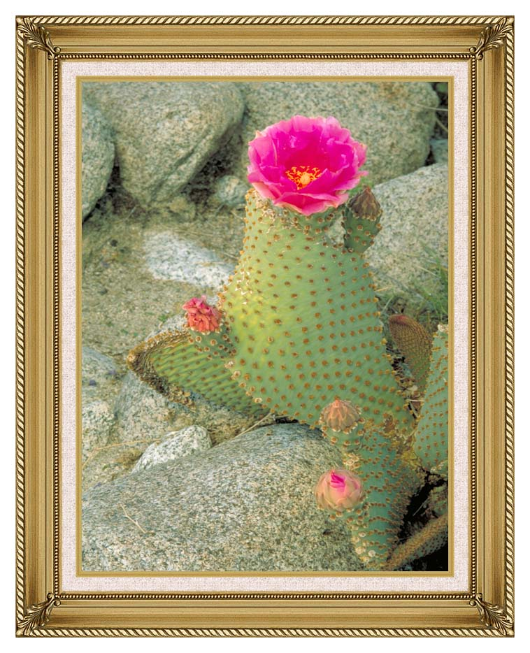 U S Fish and Wildlife Service Beavertail Cactus with Gallery Gold Frame w/Liner
