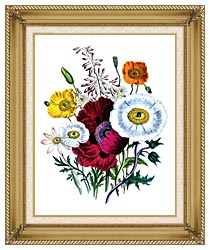 Jane Loudon Poppies Botanical canvas with gallery gold wood frame
