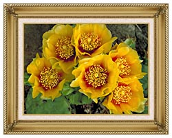 U S Fish And Wildlife Service Eastern Prickly Pear Cactus canvas with gallery gold wood frame