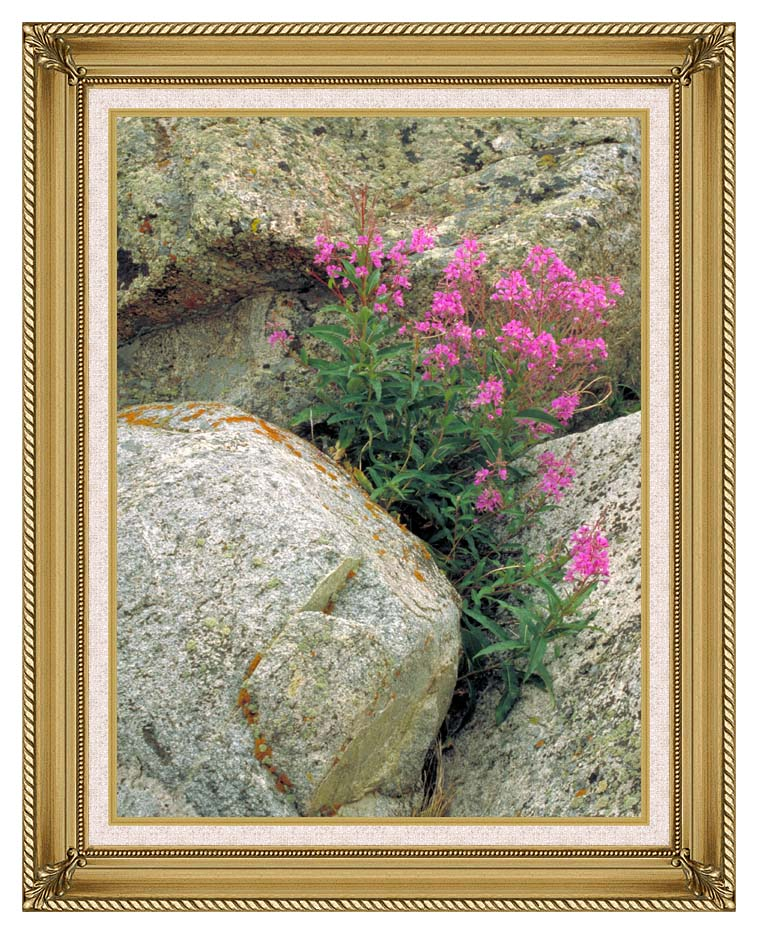 U S Fish and Wildlife Service Fireweed with Gallery Gold Frame w/Liner