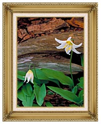 U S Fish And Wildlife Service Glacier Lily canvas with gallery gold wood frame