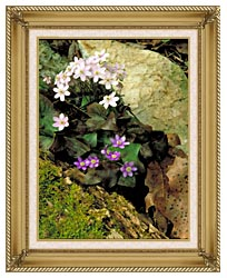 U S Fish And Wildlife Service Hepatica canvas with gallery gold wood frame