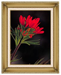 U S Fish And Wildlife Service Red Indian Paintbrush canvas with gallery gold wood frame
