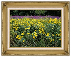 U S Fish And Wildlife Service Invasive Purple Loosestrife canvas with gallery gold wood frame