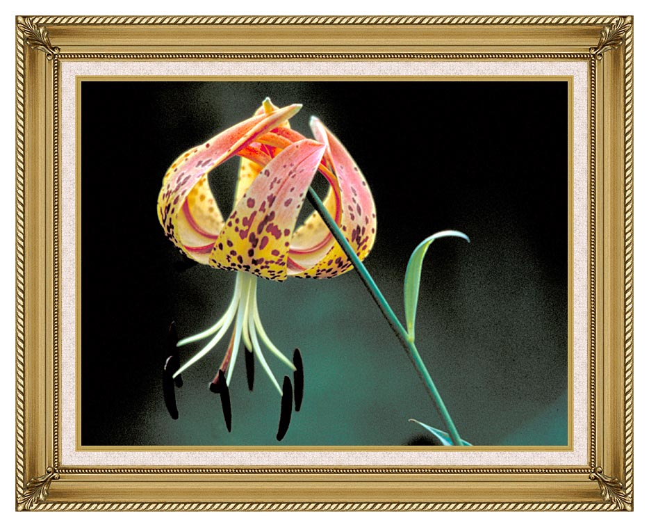 U S Fish and Wildlife Service Nodding Spotted Red Trillium with Gallery Gold Frame w/Liner