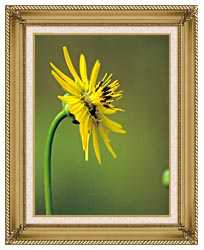 U S Fish And Wildlife Service Prairie Dock canvas with gallery gold wood frame