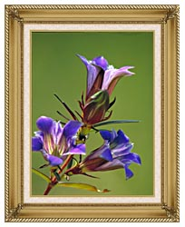 U S Fish And Wildlife Service Prairie Gentian canvas with gallery gold wood frame