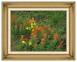 U S Fish And Wildlife Service Prairie Paintbrush canvas with gallery gold wood frame