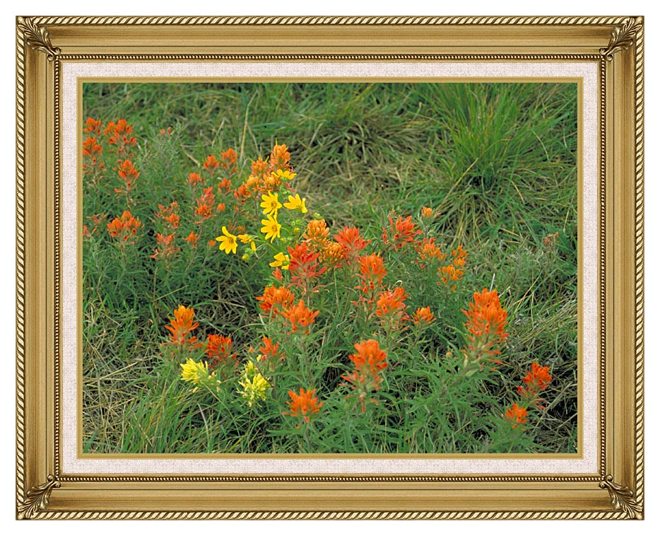U S Fish and Wildlife Service Prairie Paintbrush with Gallery Gold Frame w/Liner