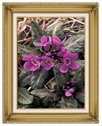 U S Fish And Wildlife Service Pribilof Wildflowers Primula canvas with gallery gold wood frame