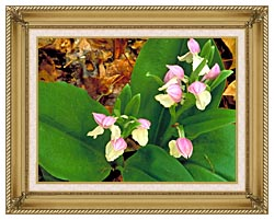 U S Fish And Wildlife Service Showy Orchis canvas with gallery gold wood frame