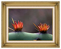 U S Fish And Wildlife Service Sideview Of Prickly Pear Cactus canvas with gallery gold wood frame