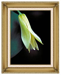 U S Fish And Wildlife Service Small Flowered Bellwort canvas with gallery gold wood frame