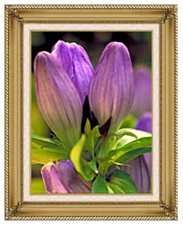 U S Fish And Wildlife Service Soapwort Gentian canvas with gallery gold wood frame