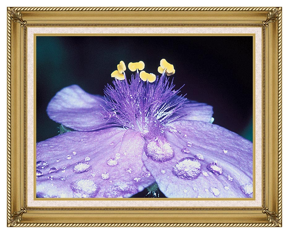 U S Fish and Wildlife Service Spider Wort Flower Art with Gallery Gold Frame w/Liner