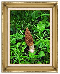 U S Fish And Wildlife Service Sponge Mushroom canvas with gallery gold wood frame