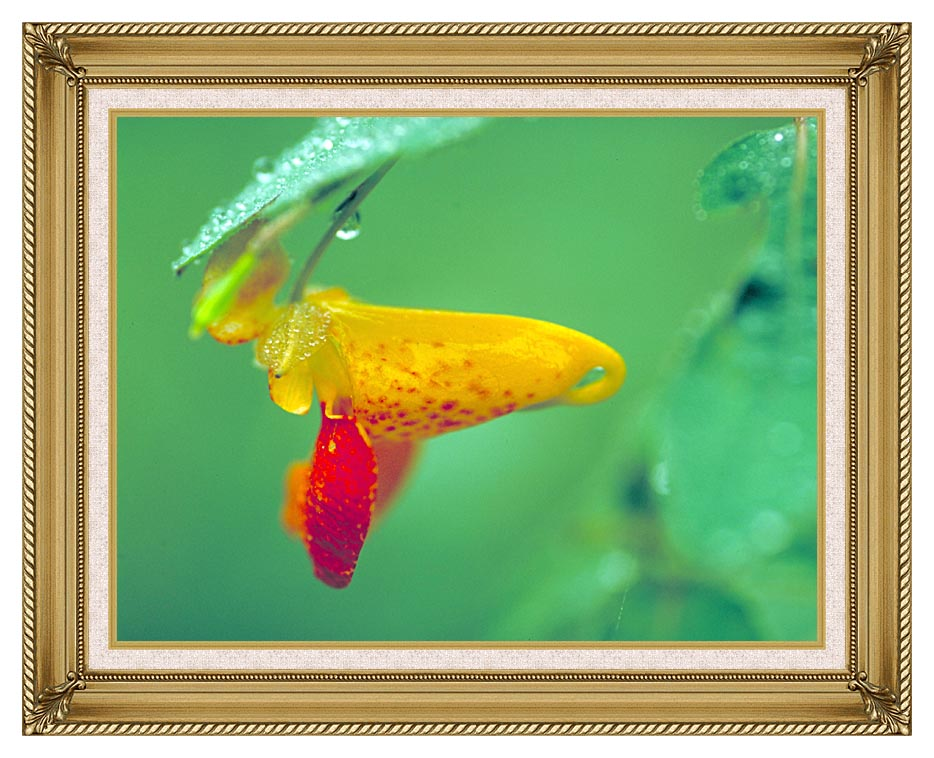 U S Fish and Wildlife Service Spotted Jewelweed with Gallery Gold Frame w/Liner