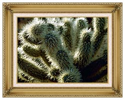 U S Fish And Wildlife Service Teddy Bear Cholla Cactus canvas with gallery gold wood frame