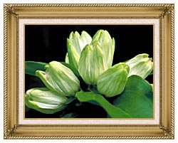 U S Fish And Wildlife Service White Gentian canvas with gallery gold wood frame