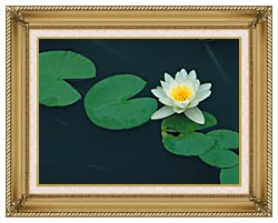 U S Fish And Wildlife Service White Water Lily canvas with gallery gold wood frame