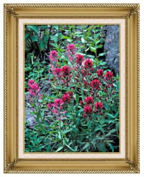 U S Fish And Wildlife Service Wyoming Paintbrush canvas with gallery gold wood frame
