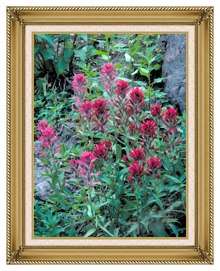 U S Fish and Wildlife Service Wyoming Paintbrush with Gallery Gold Frame w/Liner