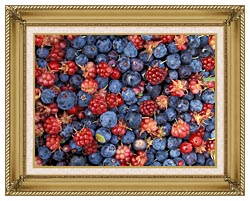 U S Fish And Wildlife Service Wild Berries canvas with gallery gold wood frame