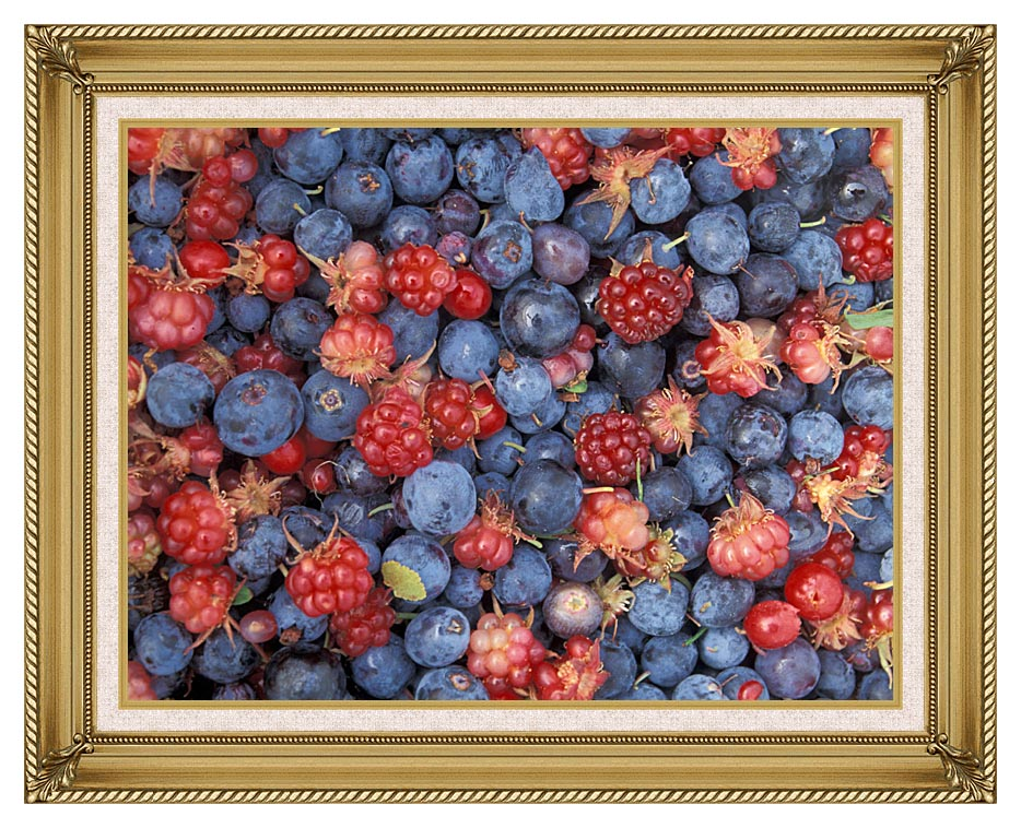 U S Fish and Wildlife Service Wild Berries with Gallery Gold Frame w/Liner