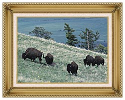 U S Fish And Wildlife Service Rocky Mountain Bison canvas with gallery gold wood frame