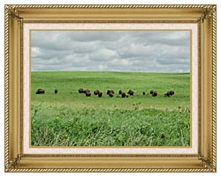 U S Fish And Wildlife Service Bison On The Range canvas with gallery gold wood frame