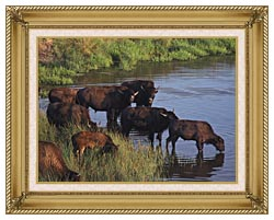 U S Fish And Wildlife Service Wild Bison canvas with gallery gold wood frame