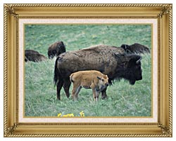U S Fish And Wildlife Service Bison Cow And Calf canvas with gallery gold wood frame