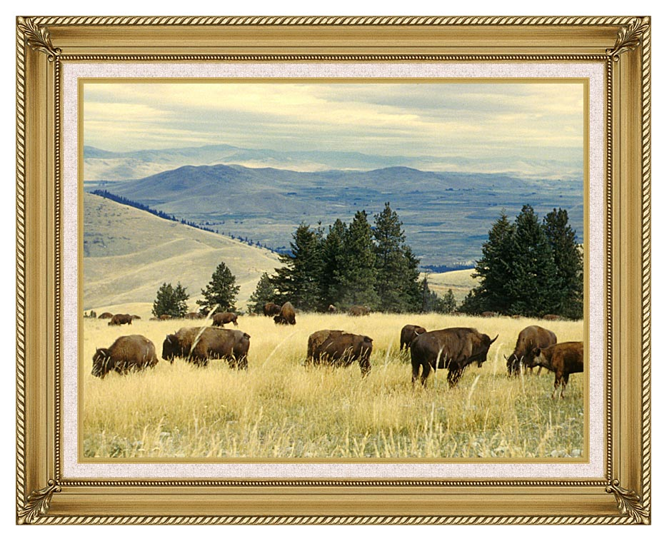 U S Fish and Wildlife Service Bison Herd with Gallery Gold Frame w/Liner