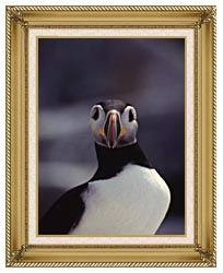 U S Fish And Wildlife Service Atlantic Puffin canvas with gallery gold wood frame
