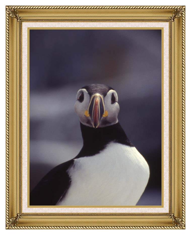 U S Fish and Wildlife Service Atlantic Puffin with Gallery Gold Frame w/Liner